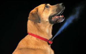 Как сделать чтобы собака не гавкала. Как отучить собаку лаять дома: полезные советы. Предупреждение об опасности