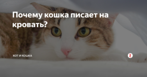 Почему кошка писает на постель? Приметы про кошек Старая кошка гадит на кровать что делать