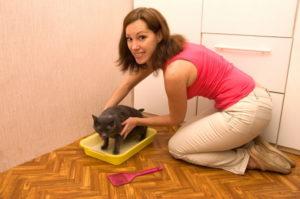 Как отучить котенка от матери. Как правильно отучить кота от сосательного рефлекса. Сколько времени требуется на отъём котенка