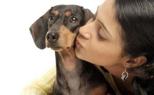 Можно ли целовать собак? Как видит мир собака - и что значат собачьи поцелуи Можно ли целоваться с собаками