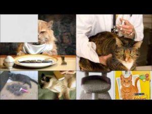 Почему у кота рвота после еды. Почему тошнит после еды? Причины, что делать. Кошку рвет целой, почти непереваренной пищей