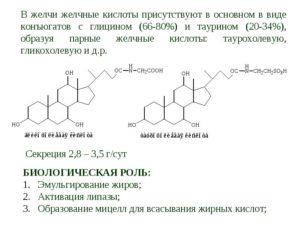 Холевая кислота биологическая роль. Жёлчные кислоты. Роль желчных кислот