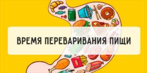 Усвоение продуктов. Как быстро переваривает пищу наш желудок