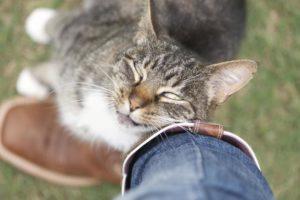 Кошка трется мордой о лицо. Причины почему нельзя отгонять кошек когда они трутся об тебя. Почему кошек часто привлекают люди, равнодушные к ним