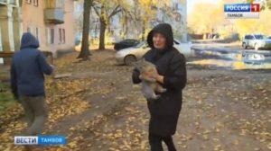 Сколько стоит снять кошку с дерева мчс. Как снять кошку с дерева: советы, помощь, рекомендации. Помощь специальных служб