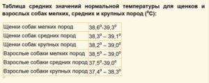 Нормальная температура у собак крупных пород овчарка. Какая температура у собаки считается нормальной - основные причины отклонения от нормы. Причинами гипотермии могут быть