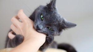 Котенок кусает руки и ноги что делать. Как отучить кота быть агрессором: кусаться, кидаться и царапаться