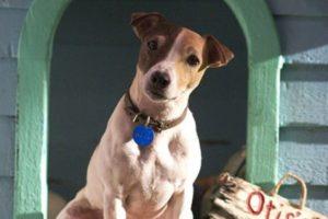 Как называется породы собаки майло из фильма маска и ее описание. Собака из маски Собака которая играла в маске