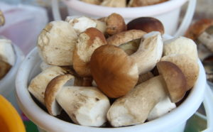 Кому полезны грибы. Самые полезные грибы. В каком виде грибы наиболее полезны