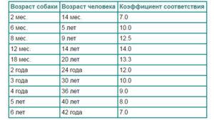 Сколько живет доберман? Какая продолжительность жизни добермана: возраст в сравнении с человеческими годами и основные причины преждевременной смерти До скольки лет живут доберманы