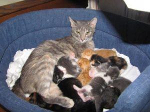 В каком возрасте раздают котят. Когда и как лучше отлучать котенка от матери? Оптимальный возраст для переезда
