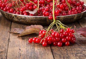 Целебная ягода калина - польза и вред народных рецептов! Калина: польза и вред для здоровья человека