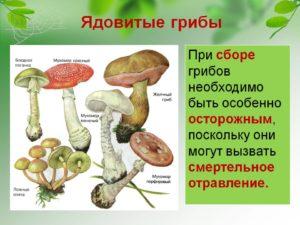 Кому в лесу нужны ядовитые грибы. Грибы ядовитые