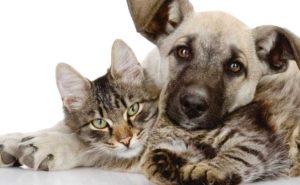 Как сдружить котенка с собакой. Возможна ли дружба кошки с собакой в одном доме