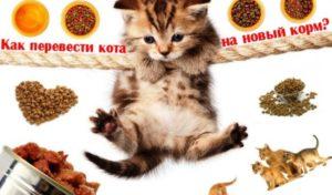 Как перевести кошку на новый сухой корм. Как перевести кота на новый корм? Радикальные меры смены рациона