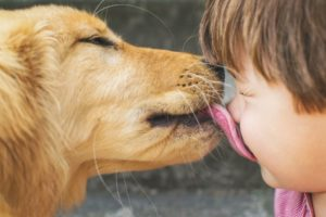 Собака часто глотает слюни и ест траву. Почему собаки лижут нос и лицо