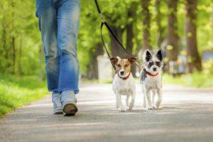 Собаки с которыми надо мало гулять. Существуют ли собаки, с которыми не нужно гулять? Быть или не быть