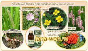 Травы для кишечника при вздутии и воспалении. Лечебные травы для желудка и их применение