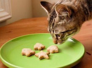 Рецепты для котов в домашних условиях. Как готовить еду для кота в домашних условиях. Натуральное питание: плюсы и минусы