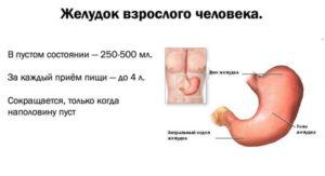 За сколько сокращается желудок. Как уменьшить объем желудка: проверенные способы. Необходимые шаги и действия