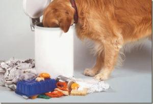 Почему щенок ест свои экскременты: причины, что делать. Как отучить питомца подбирать все подряд на улице? Немецкая овчарка ест свои экскременты
