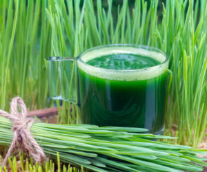 Витграсс (Wheat Grass): польза и вред, соки, как вырастить? Настолько ли полезен витграсс как о нем говорят