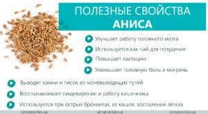 Небольшой ароматный анис поможет от хворей спастись. Анис обыкновенный: лечебные свойства и целебные возможности лекарственного растения