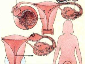 Как беременеет девушка? Можно ли забеременеть без проникновения? Что говорят специалисты
