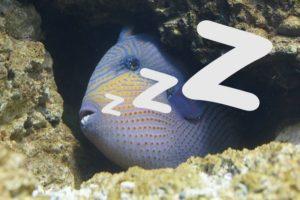 Рыбки спят, они устали. Как рыбы спят? Как спят рыбы в аквариуме