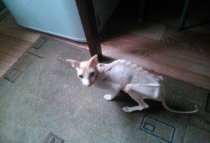 Чем кормить кота чтобы набрал. Очень худая кошка – как её откормить