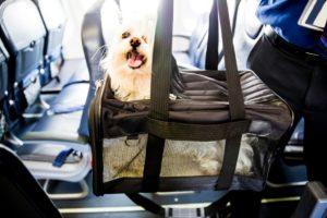 Можно ли перевозить собаку в городском автобусе. Правила перевоза животных разными видами транспорта. Подготовка собаки к перелёту