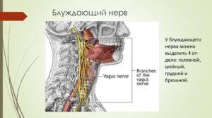 Воспаление блуждающего нерва в горле. Блуждающий нерв – симптомы и лечение. Причины воспаления нерва