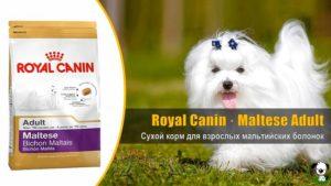 Какой сухой корм лучше подойдет для белых собак? Как правильно и чем кормить мальтийскую болонку чтобы не текли глаза Натуральный корм для белой собаки