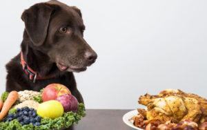 Можно ли собакам ряженку. Можно ли собакам есть молочные продукты и какие. Кефир и рацион пса