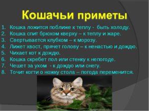 Почему кошки не приживаются? Кот в доме приметы