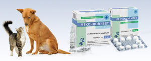 Мексидол для кошек инструкция по применению уколы. Мексидол-вет для собак и кошек. Инструкция по применению для собак