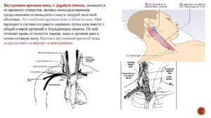 Воспаление яремной вены у человека. Анатомия Внутренней яремной вены человека - информация. Основные причины и симптомы