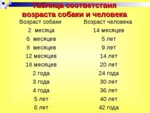 Как определить возраст собак алабая. Как определить возраст собаки по зубам за пять минут. Как перевести собачий возраст на человеческий, сколько у собак идет год жизни по человеческим меркам: расчет