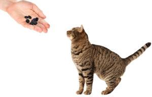 Как правильно дать кошке активированный уголь. Активированный уголь для кошек и собак Можно ли давать кошкам активированный