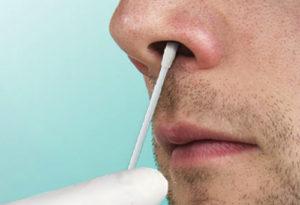 Золотистый стафилококк в носоглотке лечение. Народные средства в борьбе со стафилококковой инфекцией. Способы заражения золотистым стафилококком