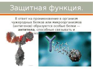 Аллергия чужеродный белок. Что плохого в мясе и как минимизировать этот вред. Почему чужеродные белки не являются антителами