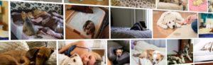 Как отучить собаку от кровати хозяина. Как отучить собаку спать на кровати с хозяином: простые способы. Требования к спальному месту питомца