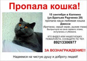 Что делать если пропал кот в поселке. Как найти пропавшую кошку. Подготовка к поискам