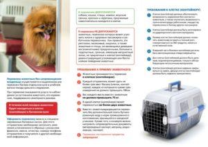 Как проехать в поезде с кошкой. Правила перевозки кошек в поезде по России РЖД: какие документы и прививки нужны для дальнего следования. Подготовка животного к дороге