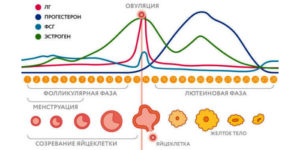 Причины сдвига цикла месячных. Симптомы нарушения менструального цикла