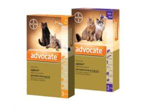 Капли адвокат для кошек против блох. Капли адвокат для кошек Можно ли адвокат для собак использовать кошкам