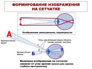Построение изображения на сетчатке глаза. Глаз человека Какое изображение получается на сетчатке глаза