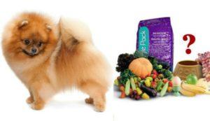 Правильное питание померанского шпица. Виды питания для померанского шпица, как правильно и чем кормить. Запрещенные продукты для мелких пород собак