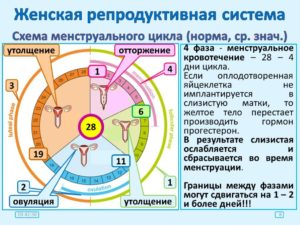 Причины сдвига цикла месячных. Почему может сбиться цикл месячных и как восстановить его