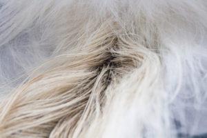 Почему у кошки жирная шерсть? Здоровая кожа и шерсть у кошки